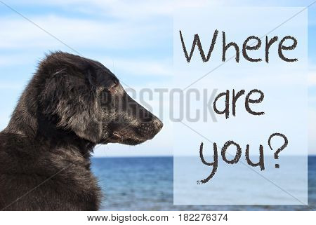 English Text Where Are You. Flat Coated Retriever Dog Infront Of Ocean. Water In The Background