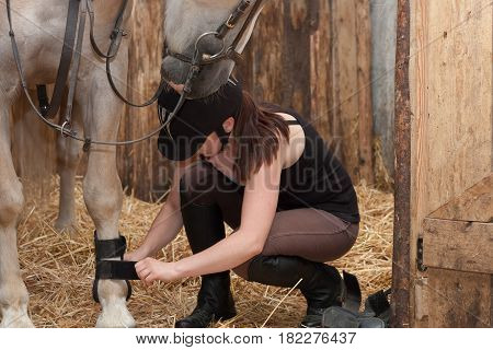 Young Woman Threading Leg Protectors On Her Horse In Stable.