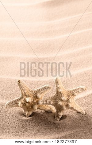 starfish or star fish twins on beach sand. Backgorund with copy space.