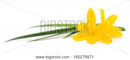 Two yellow flowers isolated on the white.