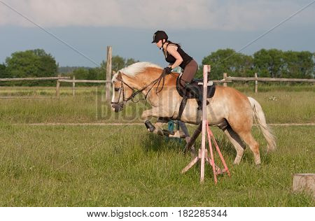 A Young Woman Jumping Over Hurdle On A Horse Haflinger