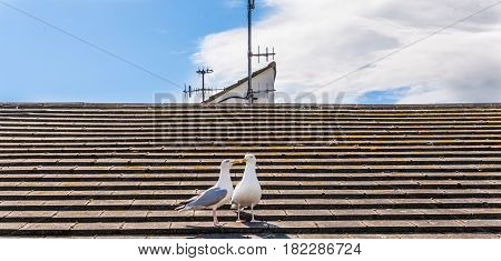 Two Beautiful White Birds, Gulls On The Roof Of The Seaside Village, The Blue Sky
