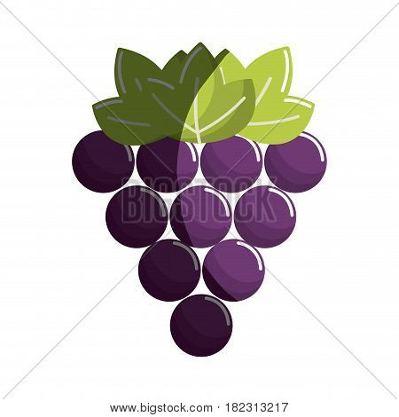 grapes fruit icon image, vector illustration design stock