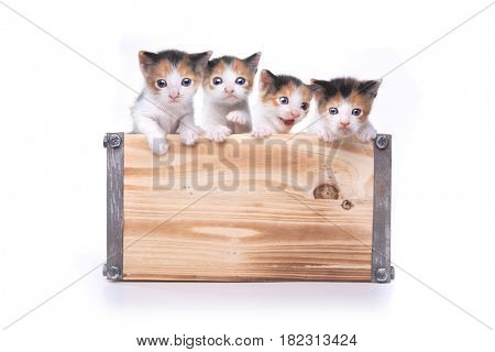Adorable Box of 3 week old Baby Kittens Waiting to be Adopted