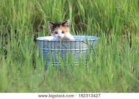Adorable Kitten Outdoors in Green Tall Grass on a Sunny Day
