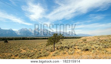 Lone Tree in front Grand Tetons Peaks in Wyoming