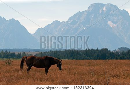 Bay colored horse in front of Mount Moran in Grand Teton National Park in Wyoming USA