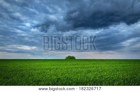 Green Field Of New Wheat Plant