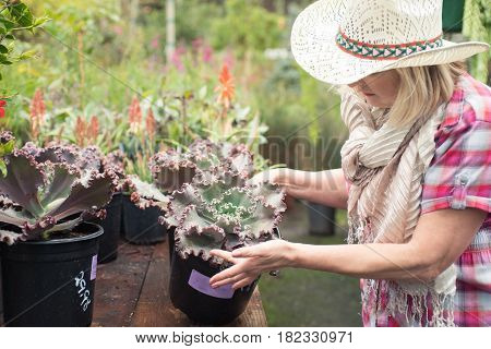 Good looking woman choosing plants at nursery for her backyard, looking picky and thoroughly.