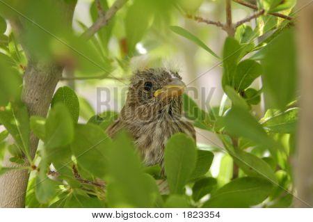 Baby Bird 3