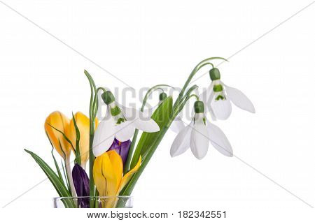 bouquet from crocus and snowdrops on isolated on white background