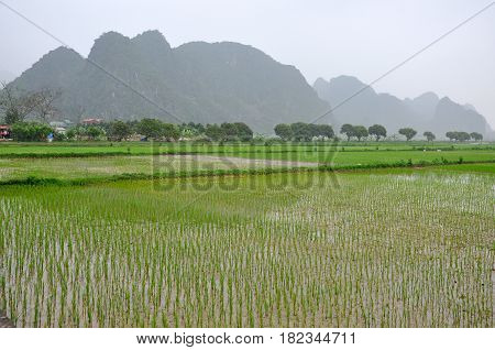 Vietnam Landscape. Rice Fields And Karst Towers In Ninh Binh