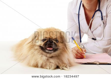 Veterinarian doctor and small dog. poster