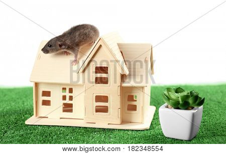 Composition with decorative house model and cute funny rat on white background