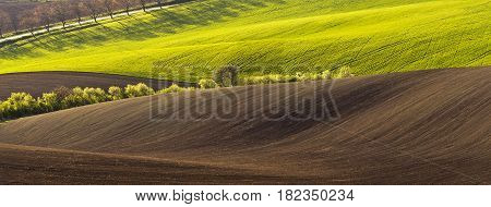 Spring wavy landscape with green and brown field and tree in the evening.