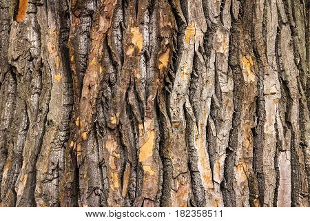 Old tree bark texture. Wooden bakcground. Free space for text.