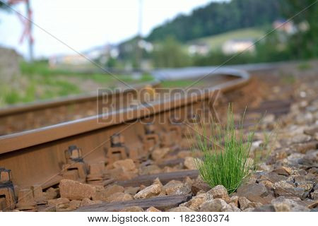 A single hassock grows next to the train tracks