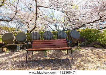 Park Bench In Sakura Tree Garden