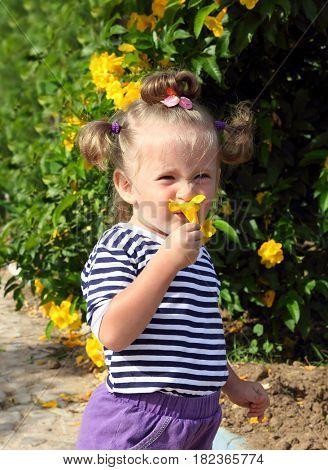 little girl smelling yellow flower in garden