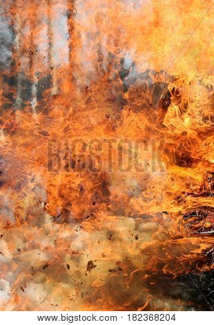 Texture flame from forest fire. Wildfire burning tree in red and orange color