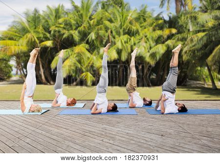 yoga, fitness, sport, and healthy lifestyle concept - group of people making supported shoulderstand pose on mat outdoors over exotic natural background with palm trees