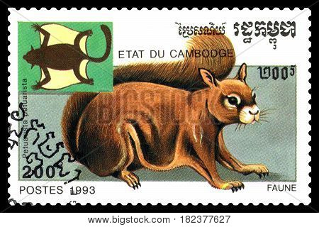 STAVROPOL RUSSIA - April 17 2017 : A Postage Stamp Printed in the Cambodia Shows Petuarista petuarista circa 1993