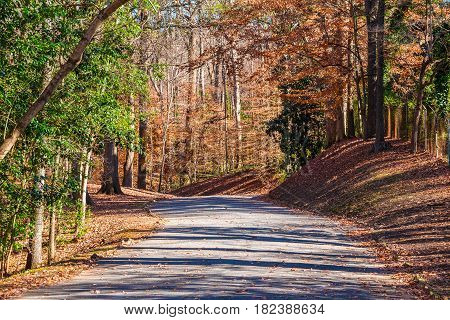 The road in the Lullwater Park in sunny autumn day Atlanta USA