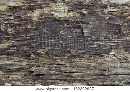 Texture of an old rotten board, like a background.