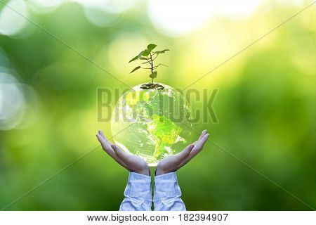 Planet and tree in human hands over green nature Save the earth concept Elements of this image furnished by NASA