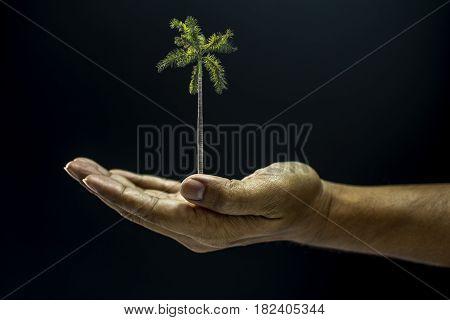 Hand Holding Areca Catechu Palm Tree