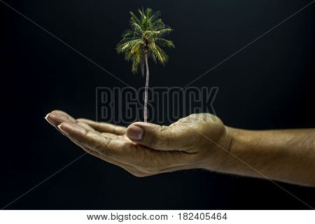 Hand Holding Coconut Palm Tree