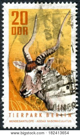 GERMANY - CIRCA 1970: A stamp printed in Germany (GDR) shows the the animals of the Berlin Zoo - Addax (Addax nasomaculatus) circa 1970