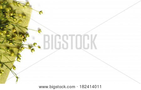 dry flax plant capsules on napkin. View from above.
