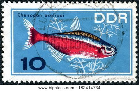 GERMANY - CIRCA 1966: A stamp printed in Germany (GDR) shows tropical fish Cardinal Tetra (Cheirodon axelrodi) circa 1966