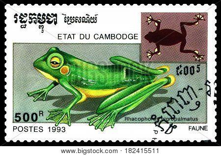 STAVROPOL RUSSIA - April 17 2017 : A Postage Stamp Printed in the Cambodia Shows Rhacophori bigropalmatus (Rhacophoras bigropalmatus) circa 1993