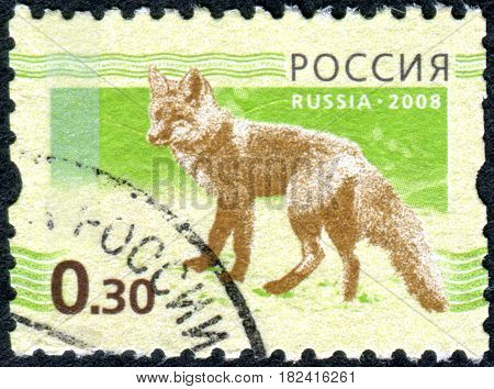 RUSSIA - CIRCA 2008: A stamp printed in the Russian Federation shows the fox (Vulpes vulpes) circa 2008