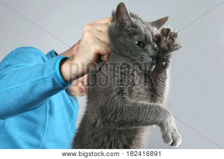 guilty gray cat held by the scruff