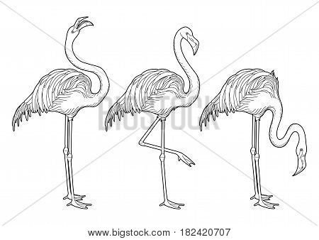 Cute graphic flamingo in the side view. Pretty exotic birds isolated on white background. T-shirt print or tattoo illustraton. Coloring book page design for adults