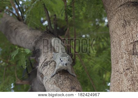 Squirrel Tears Climbing trees for food and to play with people
