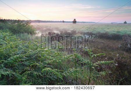 misty sunrise on wild swamp in spring