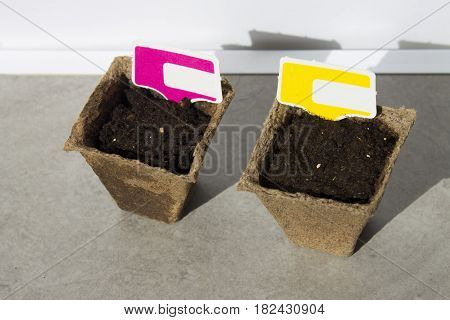 Seeds in peat pots in the sun. Decals for inscriptions. Seedling