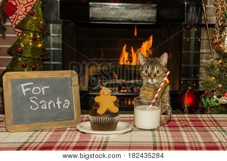 A cute cat waiting for Santa Claus