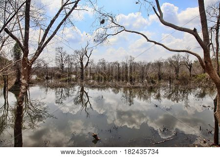 Lake with reflections of clouds. Cambodia .