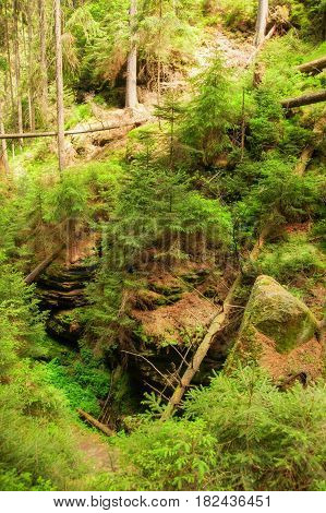 Wild ravines with old trees in the Czech Switzerland