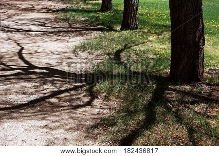 Shadows stretch across a walking path and create an eerie abstract