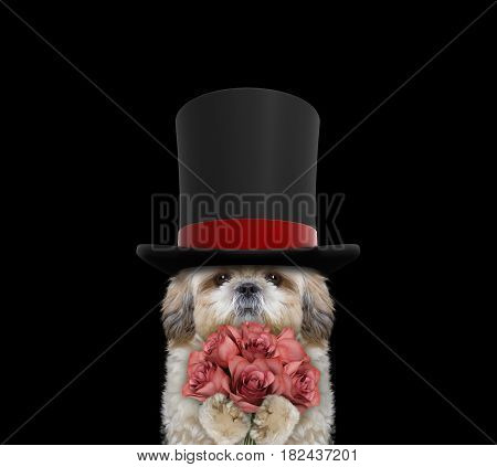 Cute dog in a high hat cylinder with roses -- isolated on black