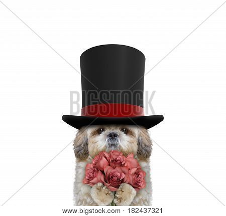 Cute dog in a high hat cylinder with roses -- isolated on white