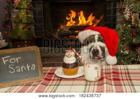 A cute dog dressed like Santa begging for a holiday cupcake and milk