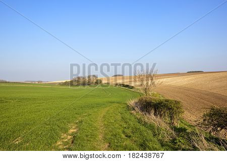 Green Wheat And Chalky Soil
