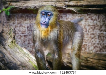 Photo of Pretty Single Monkey Over Natural Background
